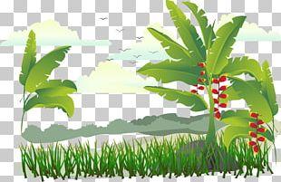 Banana Illustration PNG