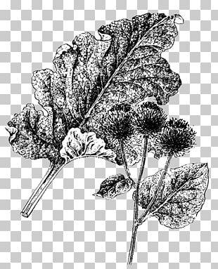 Greater Burdock Flowering Plant Leaf Medicinal Plants PNG