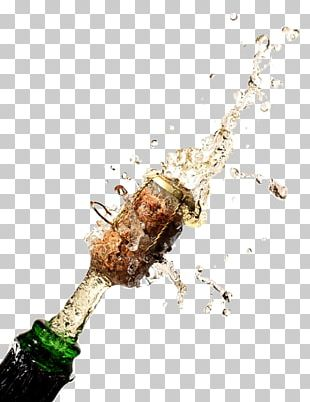 Champagne Glass Sparkling Wine Drink Bottle PNG