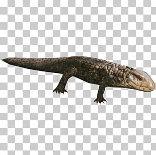 Zoo Tycoon 2 Caiman Lizards Reptile Gecko PNG