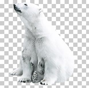 Polar Bear Animal Tiger PNG