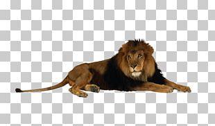 Fort Wayne Childrens Zoo Lion Reid Park Zoo Detroit Zoo Little River Wetlands Project PNG