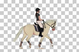 Stallion Mustang Pony Mare Dressage PNG