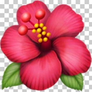 Emojipedia Flower Rosemallows IPhone PNG