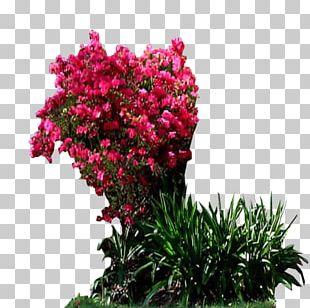 Shrub Garden Houseplant PNG