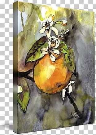 Still Life Photography Watercolor Painting Pear PNG