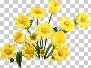 Flower Bouquet Petal Tulip PNG