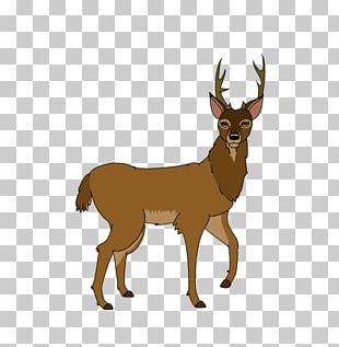 Reindeer White-tailed Deer Elk The Walt Disney Company PNG