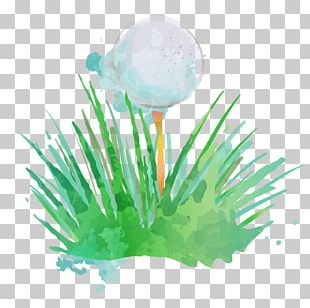 Golf Ball Golf Club Watercolor Painting PNG