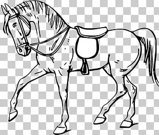 Tennessee Walking Horse Arabian Horse Equestrian PNG