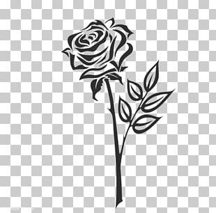 Cut Flowers Floral Design Rose Family Leaf PNG
