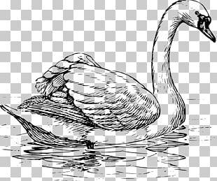 Drawing Bird PNG