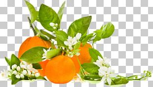 Clementine Orange Blossom Organic Food Bitter Orange PNG