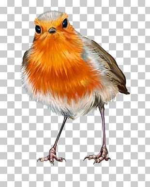 European Robin Oil Painting Stock Photography PNG