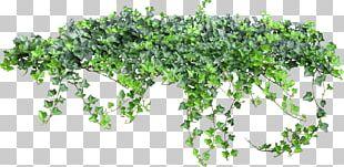 Texture Vine PNG