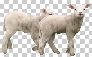 Goat Sheep PNG