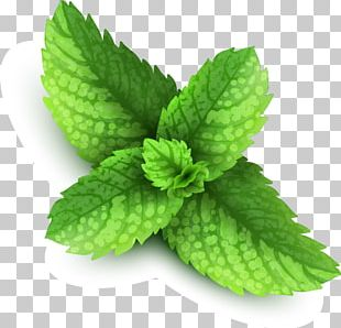 Mint Stock Illustration Illustration PNG