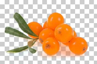 Seaberry Sea Buckthorn Oil Fruit PNG