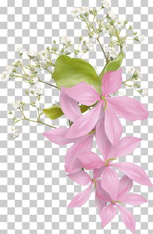 Floral Design Flower Bouquet Petal PNG