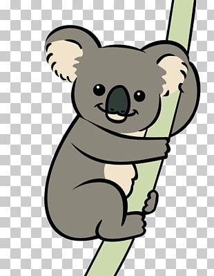 Koala Bear Animation Marsupial PNG