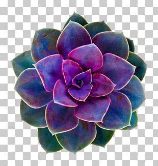Cacti And Succulents Succulent Plant Flower Cactaceae Rose PNG