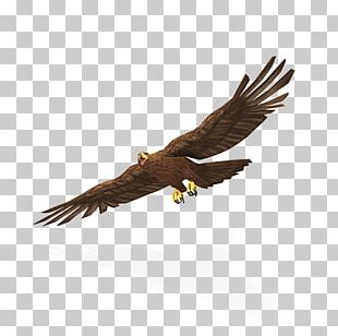 Bald Eagle Tyto Ecology Greater Yellowstone Ecosystem PNG