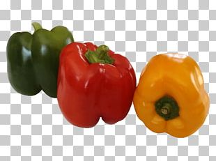 Chili Pepper Yellow Pepper Bell Pepper Friggitello Capsicum Annuum Var. Acuminatum PNG