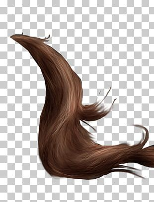 Horse Grooming Tail Mane Drawing PNG