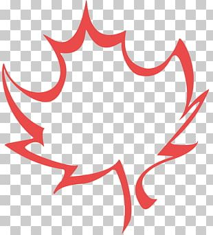 Maple Leaf Illustration Drawing PNG