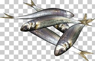 Sardine Fish Products European Pilchard Food Barbecue PNG