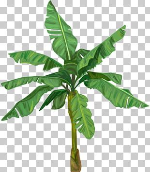 Banana Bread Banana Leaf PNG