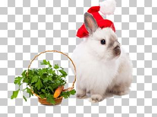 Rabbit Easter Bunny Leporids Christmas New Year PNG