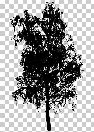 Tree Shrub PNG