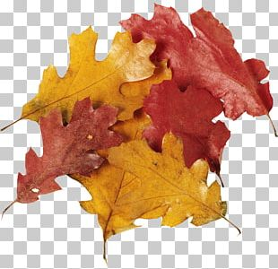 Eichenlaub Leaf Autumn Leaves Tree PNG