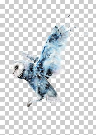 Owl Watercolor Painting Harry Potter Art Drawing PNG