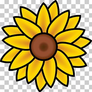 Common Sunflower Coloring Book Sunflower Seed Plant Drawing PNG
