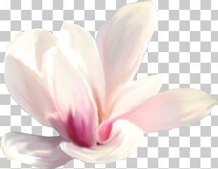 Close-up Pink M Petal Herbaceous Plant PNG