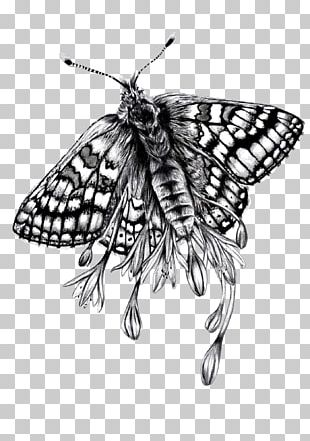 Monarch Butterfly Paper Brush-footed Butterflies Moth Drawing PNG