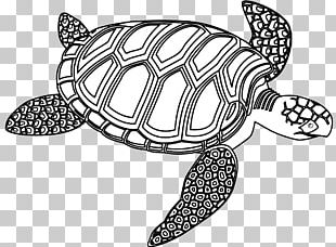 Sea Turtle Black And White Drawing PNG