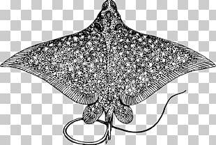 Batoidea PNG