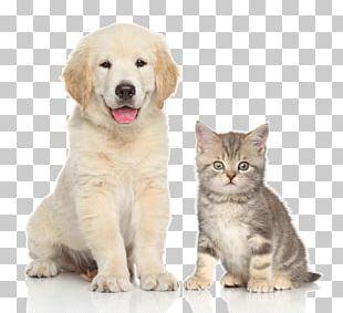 Dog Cat Kitten Pet Sitting PNG