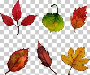 Leaf Watercolor Painting Drawing Euclidean PNG
