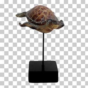 Box Turtle Sea Turtle Tortoise PNG