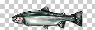 Coho Salmon Oily Fish Salmon As Food Marine Biology PNG