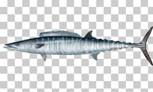 Wahoo Fishing Mackerel Saltwater Fish PNG