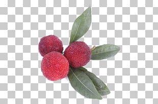 Berry Morella Rubra Food Auglis Fruit PNG