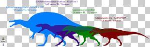 Giganotosaurus Dinosaur Size Carcharodontosaurus Mapusaurus Tyrannosaurus PNG
