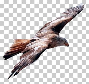 Flight Bird PNG