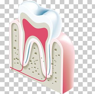 Dentistry Tooth Icon PNG