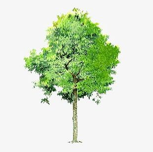 Trees Background Trees Transparent Element PNG